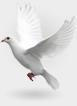 اولین پایگاه اینترنتی اشتراک و فروش فایلهای دیجیتال ایران